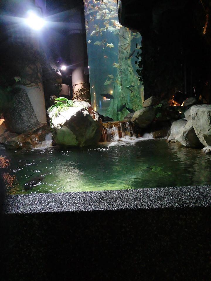 ochiq akvarium